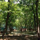 Отдых в приморье - база отдыха Земноморье, Фотогалерея, изображение Общий план